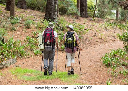 Rear view of hiker couple hiking in forest