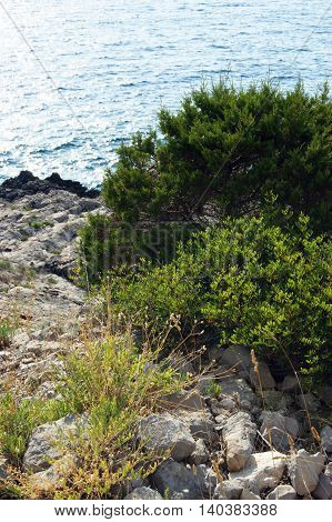 The green bushes on the rocky coast of the Adriatic Sea