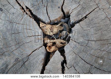 old tree cut stump on texture background