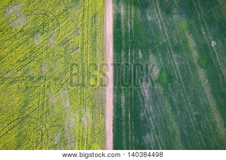 Abstract aerial photograph of canola growing on farmland