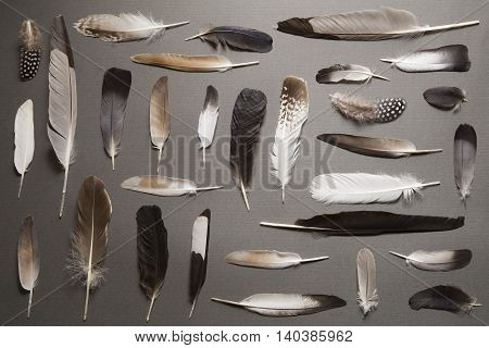 Various feathers on a gray cardboard background