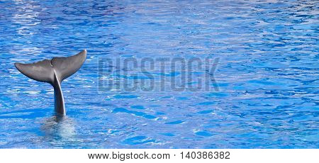 Dolphin waving goodbye with its tail in blue water