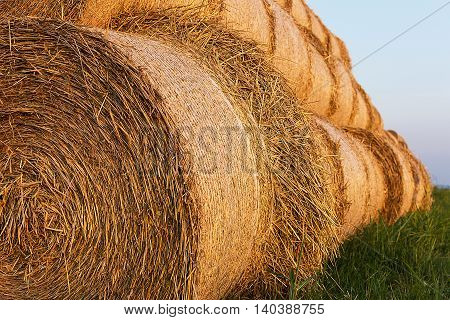 Bales of Hay Rolled Into Stacks. Rolls of Wheat in the Grass. Bales of straw. Selective Focus.