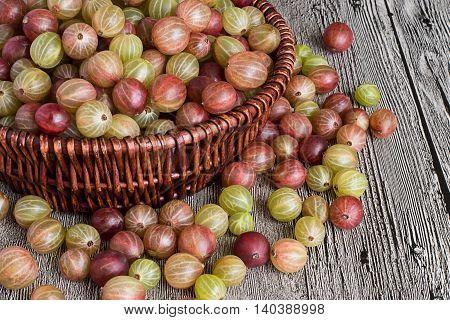 Gooseberries in the wicker basket on gray wooden table.