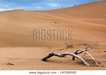 dried tree in the desert, people wander through the sand