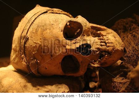 Real human ancient scull in the museum