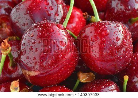 Sweet red cherries with water drops macro.