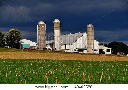 Lancaster County Pennsylvania - October17 2015: Cows grazing next to an Amish barn with three tall silos