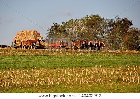 Lancaster County Pennsylvania - October 15 2015: An Amish family with two teams of horses baling straw in a field on their farm