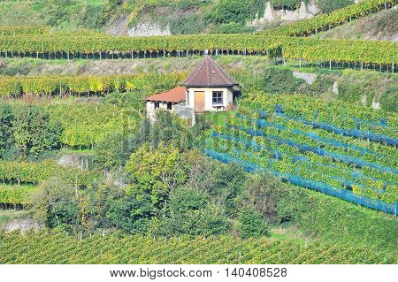 Vineyard Landscape at Kaiserstuhl Wine region in Black Forest,Baden-Wuerttemberg,Baden Wine Road,Germany