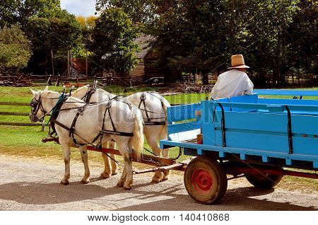 Lancaster Pennsylvania - October 14 2015: Guide in high straw hat drives a tourist wagon pulled by two white horses at the Landis Valley Village and Farm Museum