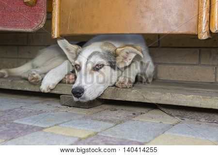 Sad dog lying in its secluded corner