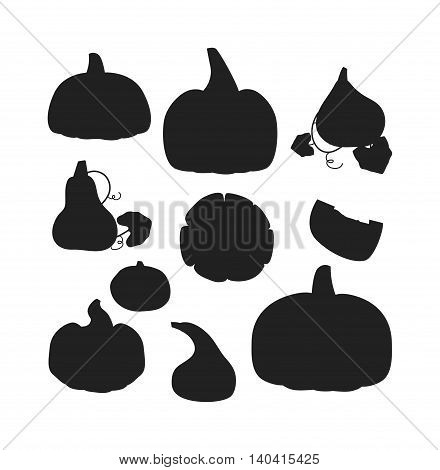 Autumn collection of pumpkin set elements design with different pumpkins oriental bittersweet vector illustration. Orange halloween pumpkin set vegetable collection. Harvest symbol season decoration.