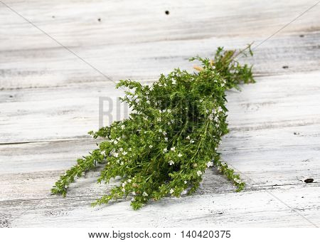 Blooming summer savory lat. Satureja hortensis homeopatic remedy and traditional popular herb