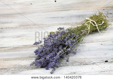 Dried Lavandula common name lavender traditional culinary herb and for extraction of lavender oil