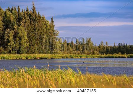 Alberta lake and marshland