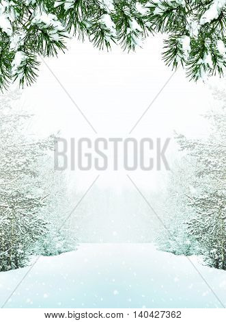 forest in the frost. Winter landscape. Snow covered trees