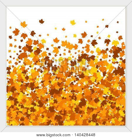 Vector banner of scattered maple leaves in autumn colors. Isolated.