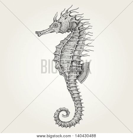 Hand drawn seahorse. Vintage vector illustration of marine fish