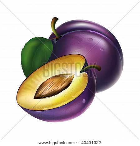 Plum with leaves. Isolated illustration on white background.