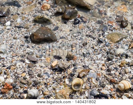 The surface of the sea coast from the wreckage of shells and small pebbles on the beach with a blurred background and focus on the foreground