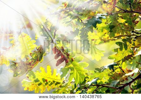 close up shot of autumn leaves and light