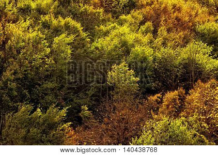 forest with colorful leaves during autumn