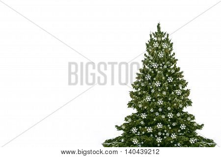 Snow covered trees. fir branch isolated on white background. Christmas tree