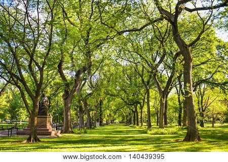 Trees in a park form a row with a statue to the side