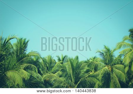 Coconut palm trees at tropical beach, vintage filter
