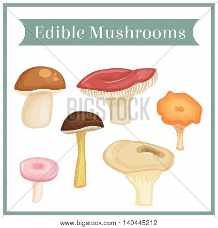 Collection of edible mushrooms. Isolated objects. Vector colored illustration in cartoon style.