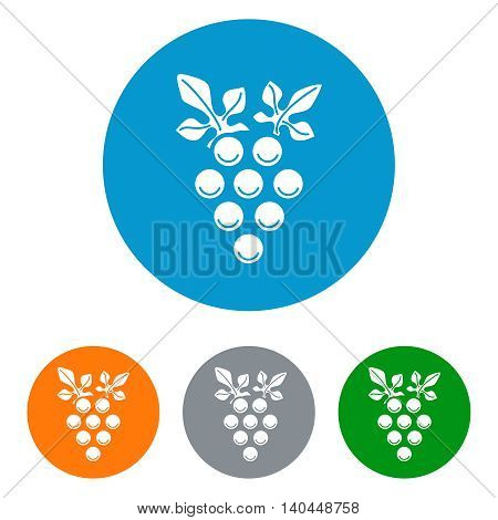 Wine brunch flat icons set in colorful circles. Vine with grapes vector illustration