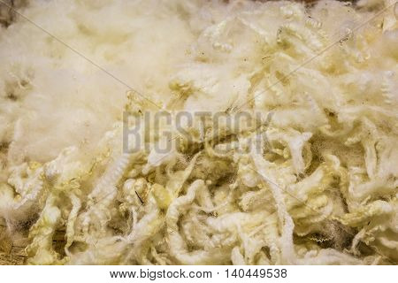 A photo of golden fleece Close up shot Selective focus