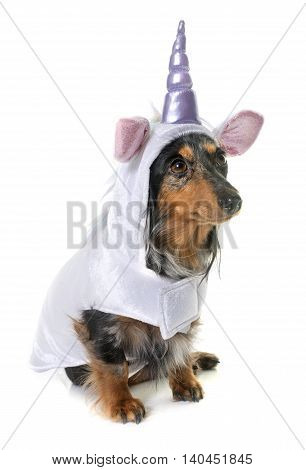 unicorn dachshund in front of white background