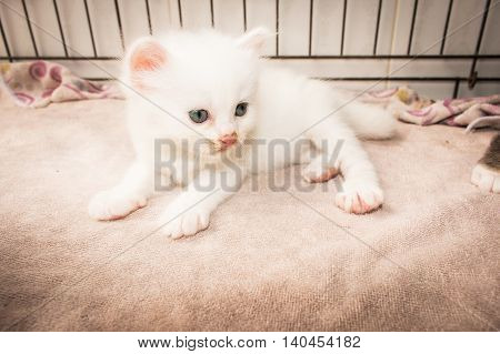 Cute kitty cat laying on pink soft towel