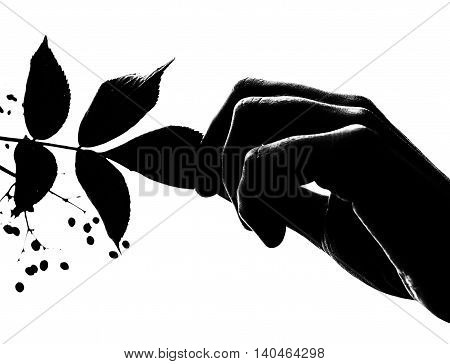Hand holding a leaf of a tree silhouette black and white
