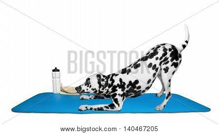 Dog doing yoga or pilates exercise -- isolated on white