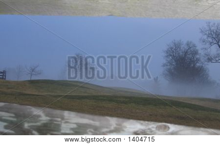 Trees In The Mist!