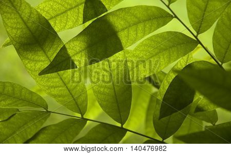 Leaves of trees nature green leaves Beautiful background