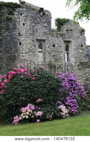 Several shrubs Rhododendron wash at a castle