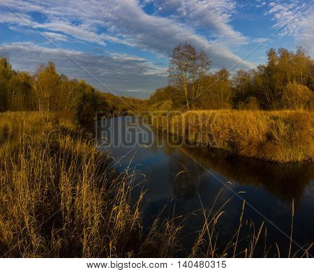 Golden autumn on the river Luga, Novgorod oblast, Russia