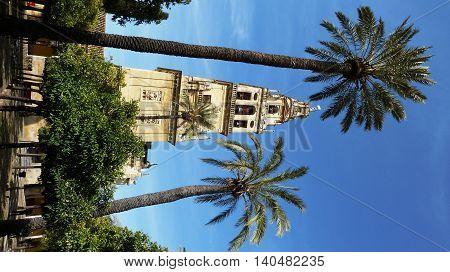 A sunny garden in Sevilla in February