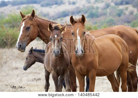 Wild horse family. Horse herd in the nature