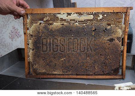 Hands Holding A Honey Comb