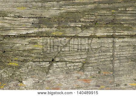 Old Wood Log Background