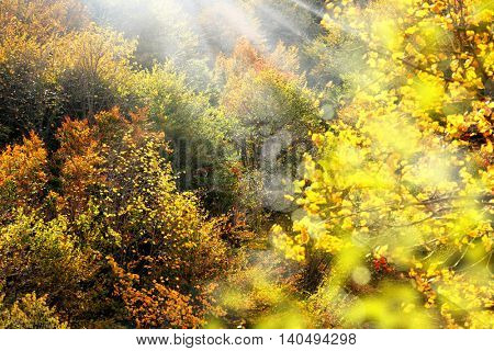 nature image of trees with autumn leaves