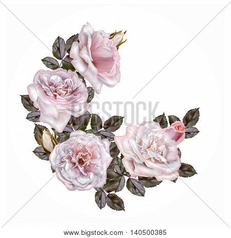 Garland of pale pink and pastel roses circle round shape painting. Isolated on white background.