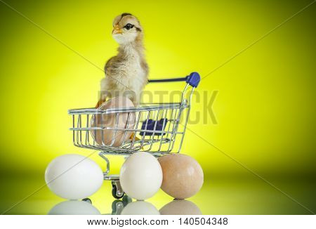 Cute Chick In A Trolley With Eggs