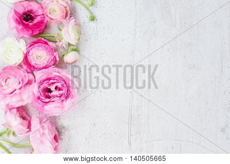 Pink and white ranunculus fresh flowers on aged white wooden desktop with copy space