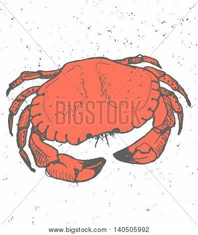 Vintage graphic with Crab, Vector Print. Food vector